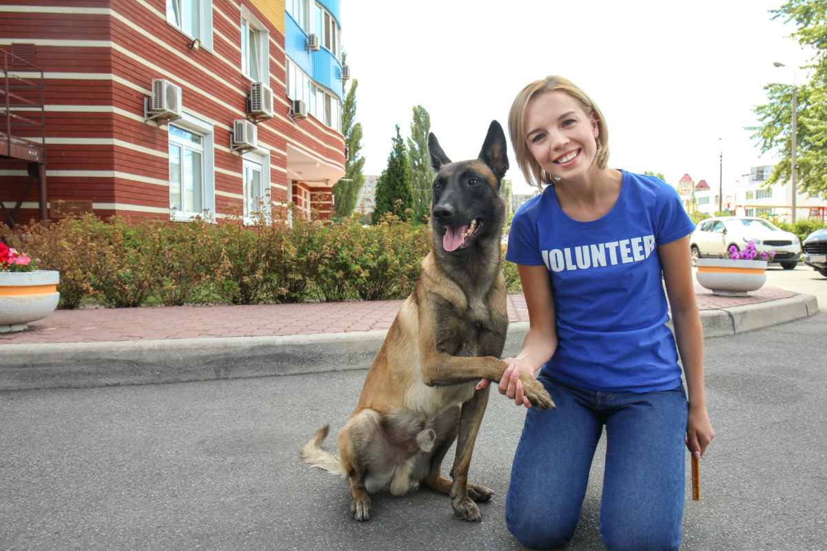 woman volunteer shaking hands with dog in shelter