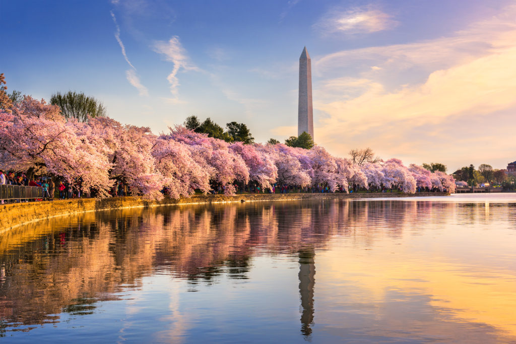 best places to travel alone in the U.S.- Washington, D.C.