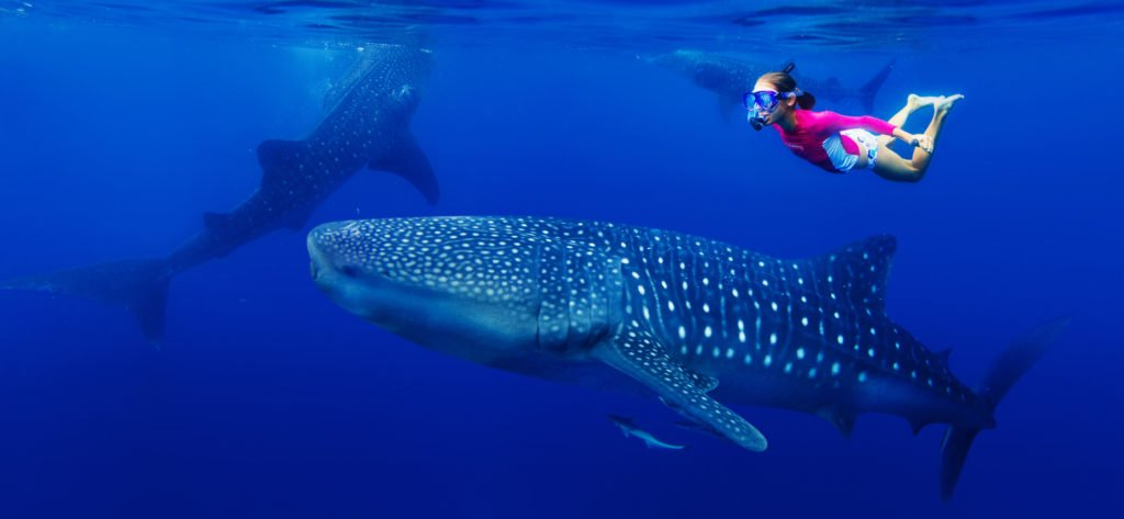 adventures in mexico - snorkeling with whale sharks