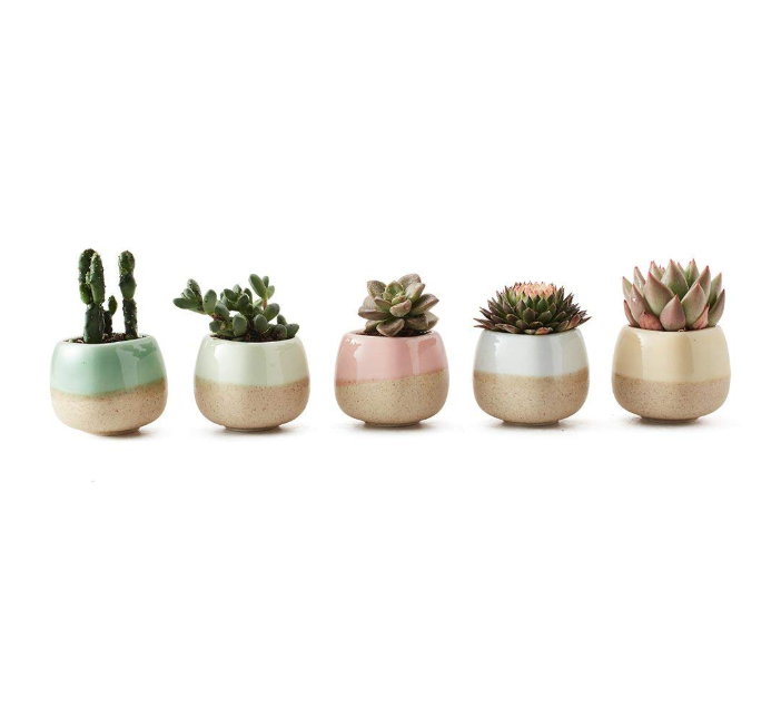 5 succulant planters in a row