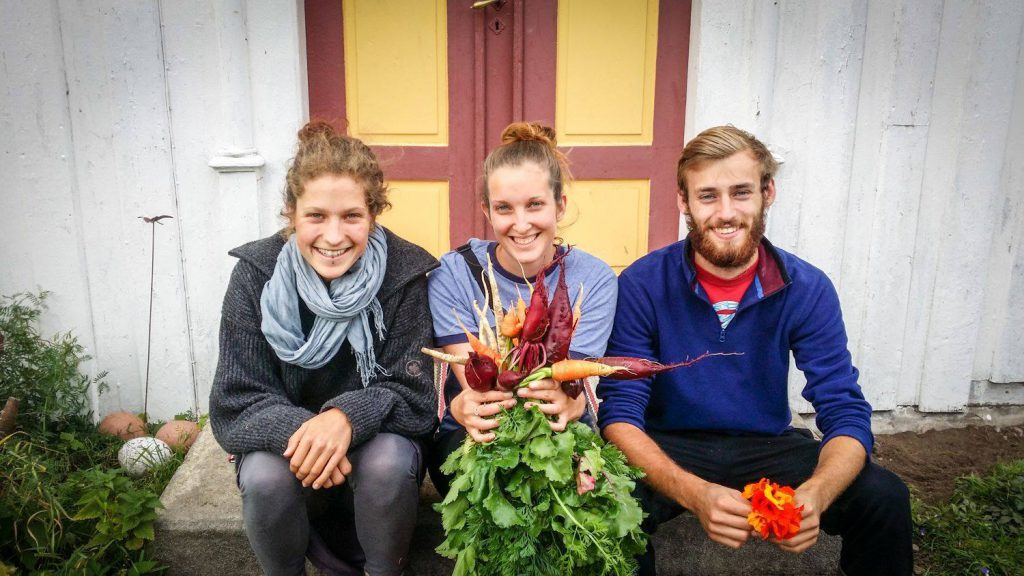 group of three volunteers working with WWOOF
