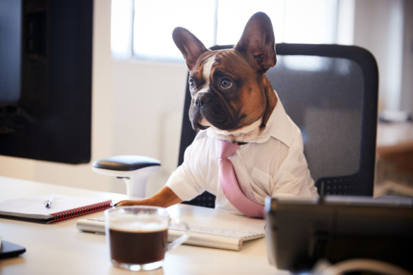 dog dressed in a suit sitting at a desk