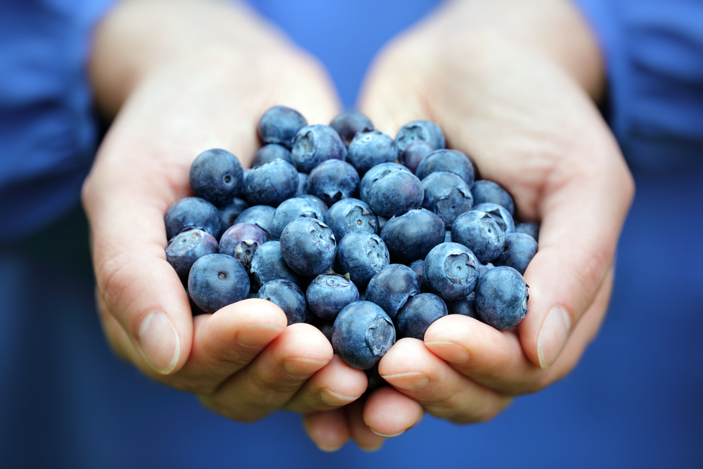 two hands holding a bunch of blueberries – the health benefits of antioxidants