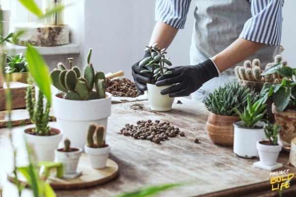 person enjoying the benefits of hobbies by planting succulaants
